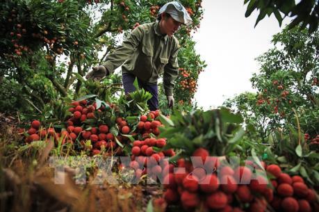Bắc Giang gia tăng giá trị sản xuất nông nghiệp