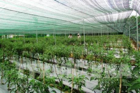 Lào Cai chuyển hướng phát triển nền nông nghiệp công nghệ cao