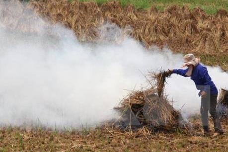 Giảm ô nhiễm không khí từ góc độ quản lý sử dụng rơm rạ