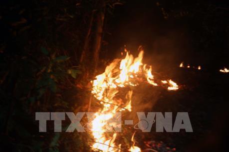 Rà soát kỹ các phương án phòng cháy, chữa cháy rừng