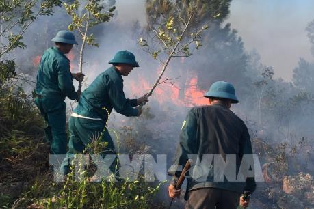 Nắng nóng gay gắt, đám cháy rừng thông lan rộng
