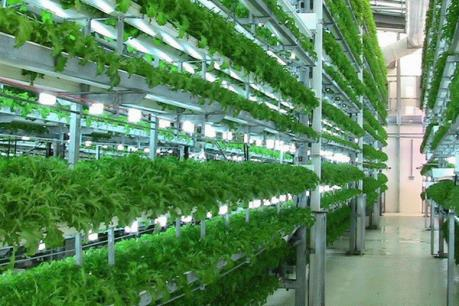 Nhiều doanh nghiệp nông nghiệp công nghệ cao được cấp giấy chứng nhận