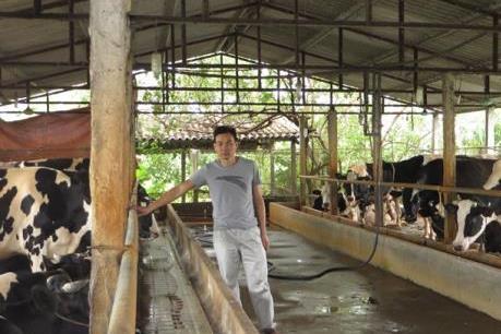 Nông dân Vĩnh Phúc vắt sữa bò ra... ô tô