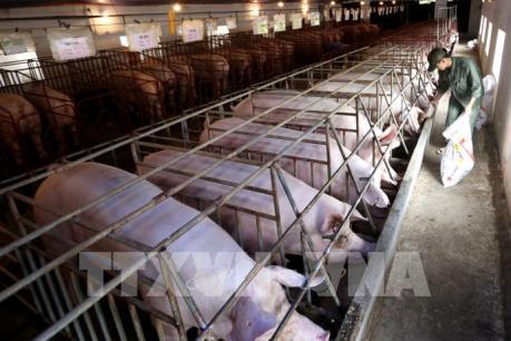 Hội nhập kinh tế quốc tế: Ngành chăn nuôi chịu nhiều tổn thương nhất