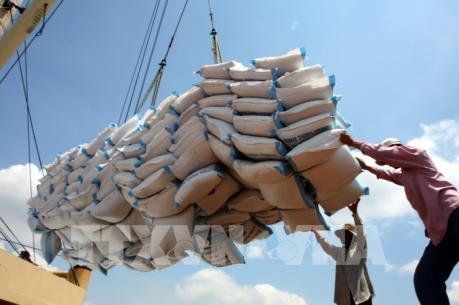Hướng tới các phân khúc thị trường gạo có giá trị cao