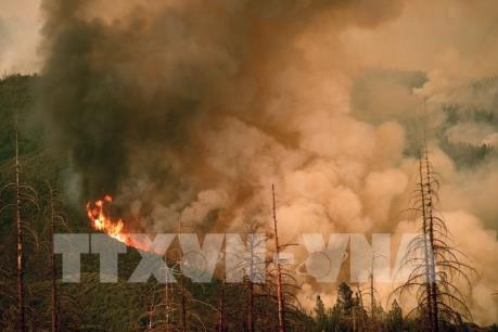 Nguyên nhân gây vụ cháy rừng kinh hoàng ở California năm 2018