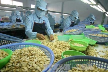 Điều gì đang xảy ra với doanh nghiệp điều Việt Nam?