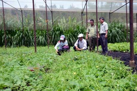 Đắk Nông thông qua 2 Đề án quan trọng về phát triển ngành nông nghiệp
