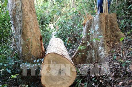 Lâm Đồng giao ngành nông nghiệp phúc tra hiện trường các vụ phá rừng