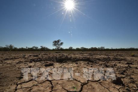 FAO chỉ ra cách đối phó với hạn hán và sa mạc hóa