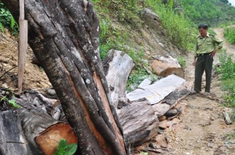 Khẩn trương điều tra, xử lý vụ phá rừng tại Ngân Sơn