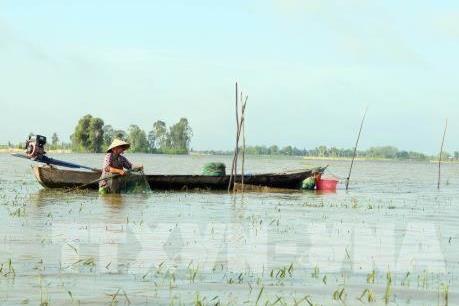 Cảnh báo lũ Đồng bằng sông Cửu Long có thể lên báo động 3
