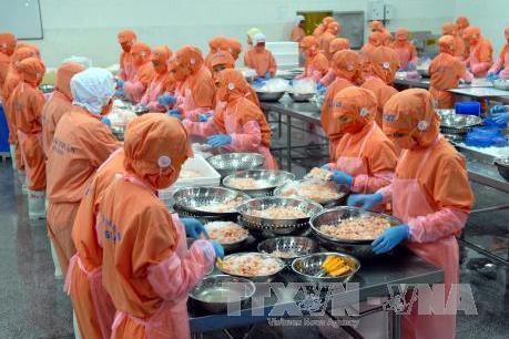 Nhiều rào cản kỹ thuật, xuất khẩu tôm sang Hàn Quốc gặp khó