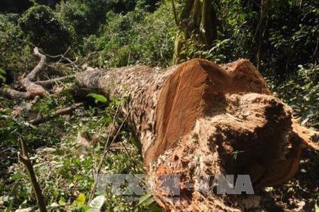 """Phá rừng ở Vườn Quốc gia Ba Bể đã trở thành điểm """"nóng"""""""