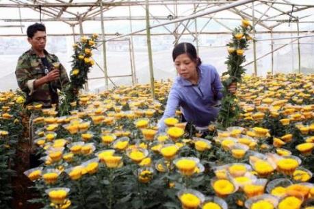 Hỗ trợ nông dân tiết kiệm điện trong chong đèn hoa cúc tại Lâm Đồng