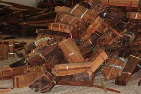 Xử sơ thẩm vụ buôn lậu gỗ trắc lần thứ 4 sau 3 lần trả hồ sơ điều tra bổ sung