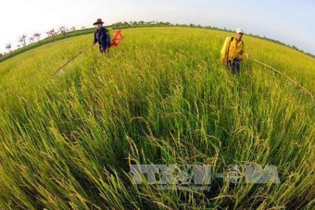 Dự báo nguồn nước vụ lúa Đông Xuân tại ĐBSCL gặp khó