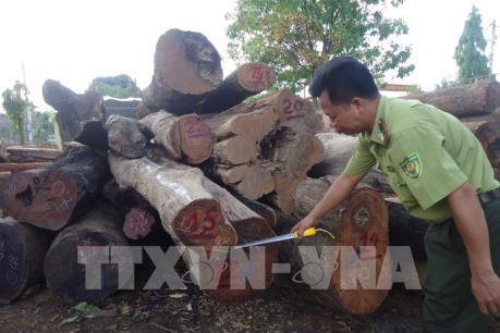 Kỷ luật cán bộ kiểm lâm liên quan vụ bắt giữ gỗ lậu quy mô lớn tại Đắk Nông