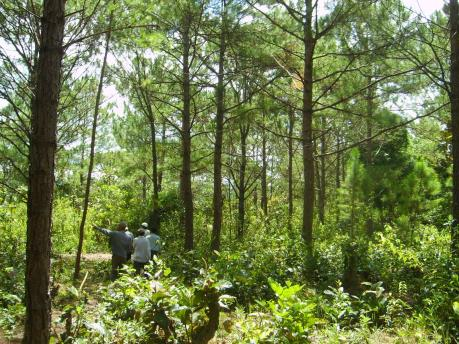 Điều tra vụ hành hung người tham gia giải tỏa đất rừng bị lấn chiếm tại Lâm Đồng