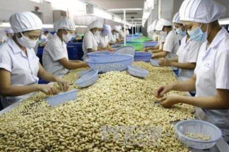 Hiệp định EVFTA: Cơ hội xuất khẩu tỷ đô cho trái điều