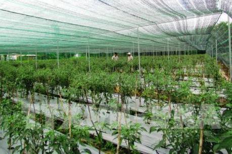 Thu hút doanh nghiệp đầu tư vào nông nghiệp công nghệ cao
