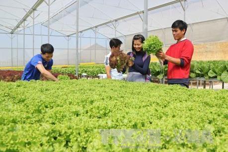 """Phát triển nông nghiệp công nghệ cao - Bài 2: """"Đòn bẩy"""" cho sản xuất, kinh doanh"""