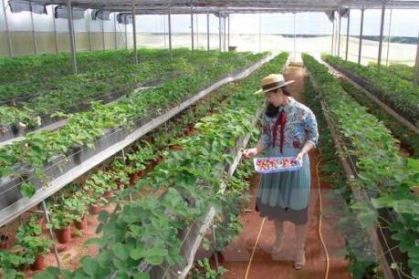 Phát triển nông nghiệp công nghệ cao - Bài cuối: Thêm nhiều cơ hội mới để phát triển