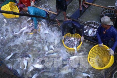 Thủy sản Việt Nam theo xu hướng tiêu dùng thế giới