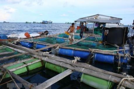 Ngành thuỷ sản Bình Thuận phát triển thành ngành kinh tế mũi nhọn