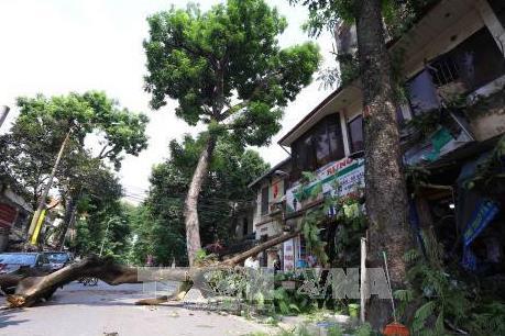 Cây đổ đè sập nhà dân khiến 2 mẹ con tử vong