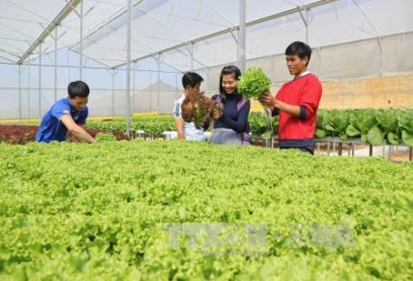 """Phát triển nông nghiệp thông minh – Bài 1: Thời nhà nông đầu tư """"công nghệ cao"""""""