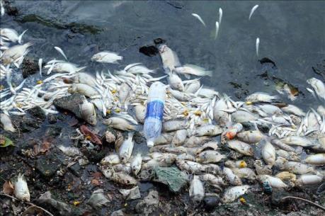 Cá chết trắng chưa rõ nguyên nhân, nhiều hộ dân điêu đứng