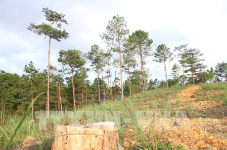 Phó Thủ tướng yêu cầu tỉnh Lâm Đồng làm rõ các vụ phá rừng