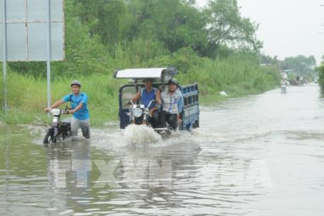 TP Hồ Chí Minh: Hơn 40 điểm ngập, cây đổ làm người đi đường tử vong