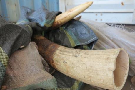 Singapore cấm bán mọi sản phẩm ngà voi từ năm 2021