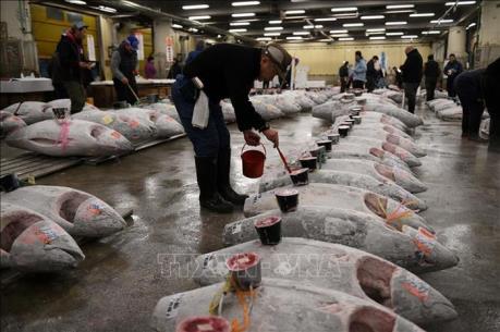 Chợ cá nổi tiếng của Tokyo chính thức đi vào hoạt động tại địa điểm mới