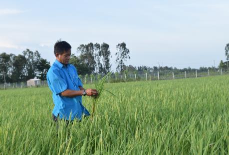 Người đi tìm giống lúa đặc sản cho huyện Lấp Vò
