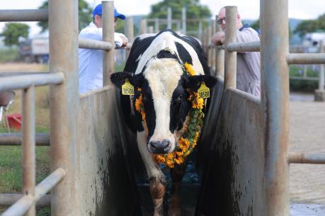 Tập đoàn TH đón gần 1.800 con bò nhập khẩu từ Mỹ