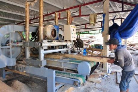 Chứng chỉ nguyên liệu gỗ - Bài 1: Chủ động nguyên liệu hợp pháp