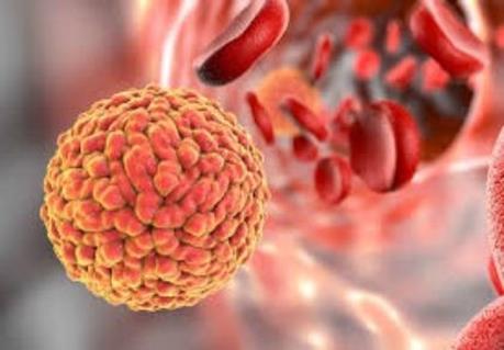 Trung Quốc phát hiện trường hợp nhiễm virus Zika đầu tiên