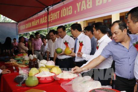 Gạo Bạch Hà của Yên Bái được cấp chứng nhận nhãn hiệu tập thể