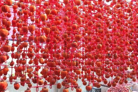 Áp dụng công nghệ Hàn Quốc vào sản phẩm hồng sấy dẻo Đà Lạt