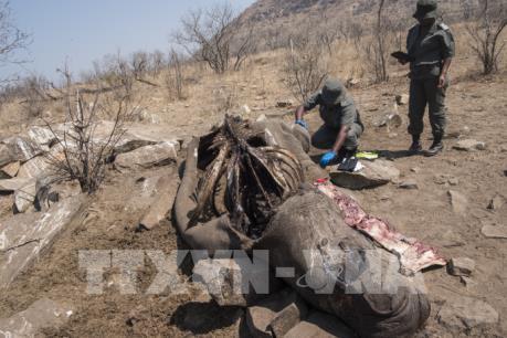 Trung Quốc cấm sử dụng và buôn bán sản phẩm từ hổ và tê giác