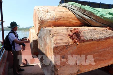 Điều tra làm rõ vụ vận chuyển gỗ lậu trên sông Sê San