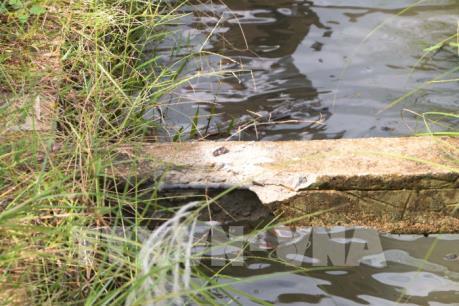 Thông tin mới vụ kênh mương bê tông cốt gỗ ở Bình Định