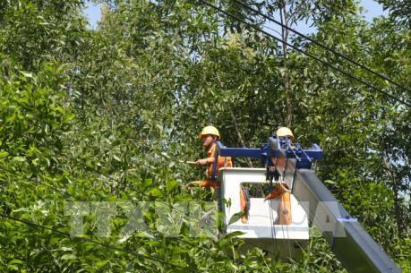 Điện lực Bình Định đảm bảo an toàn hành lang lưới điện mùa mưa bão