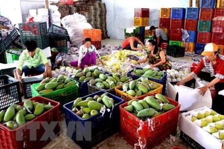 """""""Giấy thông hành"""" và câu chuyện xuất khẩu trái cây"""