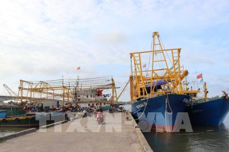 Chưa có hướng giải quyết cho 50 container cá ngừ bị ách tại cảng