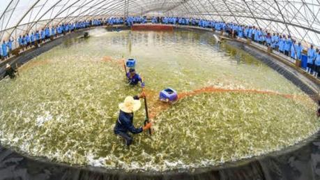 Cơ sở tôm giống đầu tiên của Việt Nam đạt chuẩn Thú y thế giới