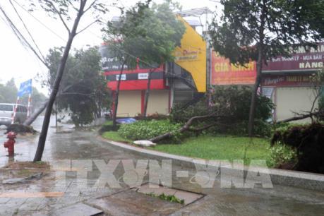 Bà Rịa-Vũng Tàu: Lưới điện bị thiệt hại nặng nhất